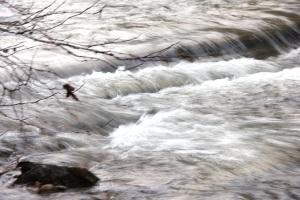 clear-creek-rushing-water