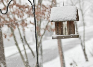 march snow front bird house