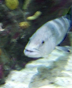 white-fish-at-aquarium-for-web